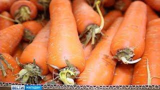 Морковь – героиня соцсетей – пропала с прилавков