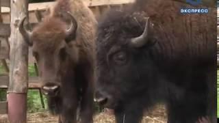 Зоопарк предлагает пензенцам придумать имя зубрихе