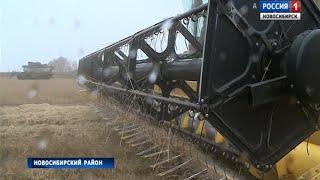 Аграрии завершают уборочную кампанию в Новосибирской области