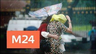 """""""Утро"""": синоптики предупредили о сильном ветре в Москве 16 августа - Москва 24"""