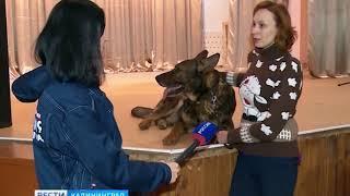 Калининградский кинолог научил овчарку танцевать