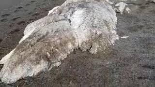 Океан подбросил загадку: «морской мамонт» оказался частью кита