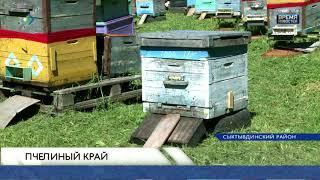 Как чувствуют себя пчёлы в Коми?