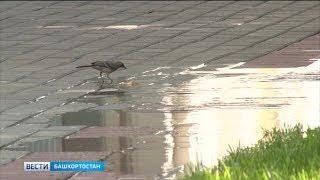 В Башкирию возвращается теплая погода без дождей
