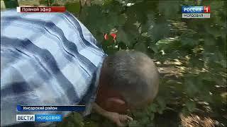 Садоводы республики рассказали «Вестям» о секретах укрепления иммунитета в холодную осень
