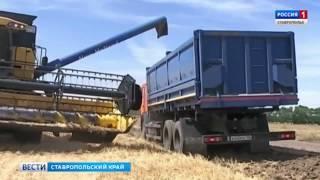 Аграрии Ставрополья получат 210 млн рублей из резервного фонда РФ
