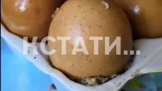 Яйца с сюрпризом из насекомых шокируют покупателей магазинов