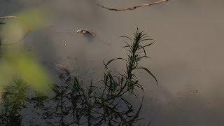 Зловонный пруд из нечистот образовался в селе Оброчном Ичалковского района Мордовии
