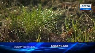 «Вести: Приморье»: Клещи атакуют приморцев