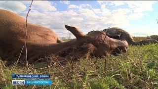 В Башкирии неизвестные обстреляли табун лошадей