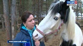 В поселке Кудряши энтузиасты организовали ферму-приют для животных
