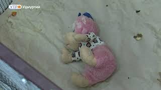 Мармозетки обживаются в зоопарке Ижевска