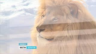 Главный синоптик Зоопарка Удмуртии медведь Гоша впервые вышел в вольер после зимнего сна