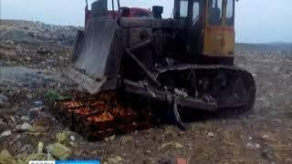 В Красноярске уничтожили санкционные яблоки