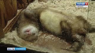 «Смоленский зоопарк» проводит показательные кормления