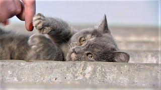 Бездомный котенок в Ханты-Мансийске ищет свой дом