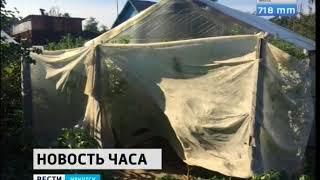 Плантацию конопли создал на даче житель Усолья Сибирского