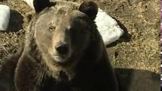 В Ярославском зоопарке готовятся к десятилетнему юбилею