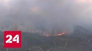 В греческих пожарах погибли уже 74 человека - Россия 24