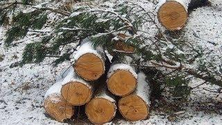 Чёрный лесоруб из Кондинского района нарубил дров на 60 миллионов рублей