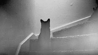В одной из школ Ханты-Мансийска сняли на видео призрак кошки