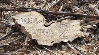 «Ясень-пень-2»: на острове Сарпинский в Волгограде вышли на след «черных лесорубов»