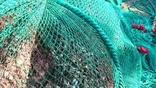 Четыре браконьерских китайских судна задержали приморские пограничники