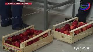 Россельхознадзор Дагестана запретил ввоз в республику зараженной продукции из Азербайджана