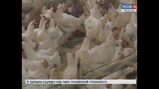 В трех хозяйствах Чувашии  вспышка птичьего гриппа