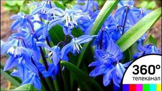 В центре Дубны появилась небесно-синяя поляна