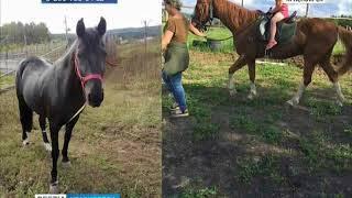 У поискового отряда волонтеров украли лошадей