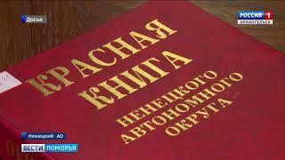 Ценная порода рыбы - европейская нельма, что водится в Печоре, может быть иключена из Красной книги