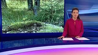 В Ростовском районе полицейские на руках вынесли потерявшегося пенсионера из леса