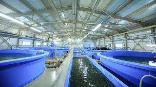 50 млн мальков сига выпустили в один из югорских рыбопитомников