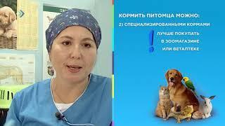 Чем кормить домашних животных? Студия 11. 11.10.18