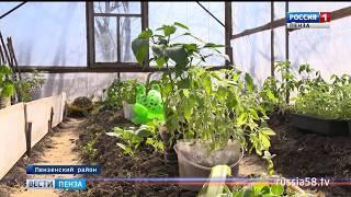 Садово-огородный сезон в Пензе стартовал позже обычного