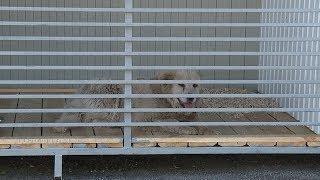 В Саранске открылся приют для бездомных животных