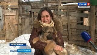 Новосибирский приют для бездомных животных может остаться без света и тепла