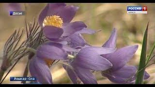 Жителям Марий Эл напоминают, что собирать редкие виды первоцветов запрещено