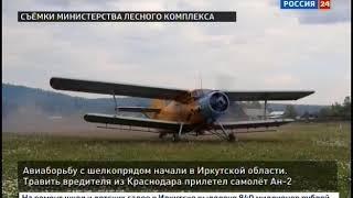 Авиаборьбу с шелкопрядом начали в Иркутской области