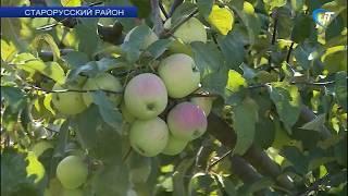 «Сады Старой Руссы» ищут инвестора для создания собственного фруктохранилища