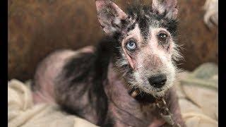 Close to 90 Cats and Dogs Rescued from 'Large-Scale Cruelty Situation' in Mississippi - News Today