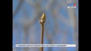 Синоптики рассказали, когда в Чувашии ждать весны