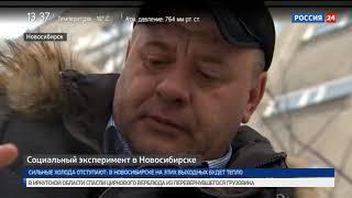 Серый волк стучится в дверь: в Новосибирске проходит социальный эксперимент