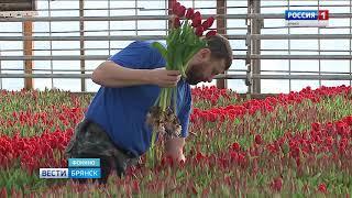 В Брянске открылись предпраздничные цветочные ярмарки