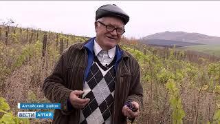 Попытка сделать Алтайский край винодельческим регионом провалилась