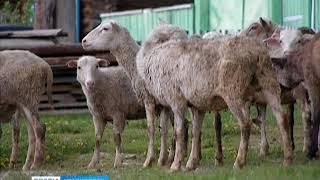 В селе Еловое объявлен карантин по бешенству