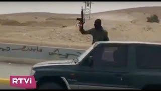 Стрельба в воздух и опасная езда на дороге. Как бедуины отмечали свадьбу  в Израиле