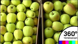 Штрафы за санкционные продукты введут в России - СМИ2