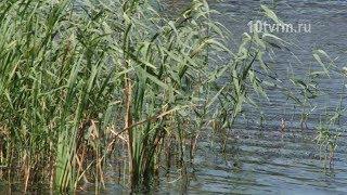 В Рузаевке утонул ребенок